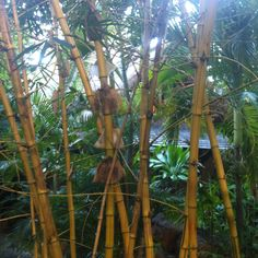 Green Mauritius, Green, Plants, Plant, Planets