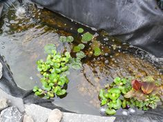 How To Clear Green Pond Water.