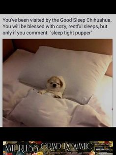 Sleep tight pupper!