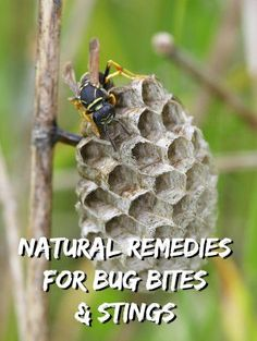 Prepper-Created Natural Treatments for Bug Bites and Stings - MomPrepares