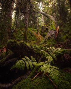 Лес Фотография, Фотография Гор, Морские Пейзажи, Природа, Идеи, Картинки, Леса