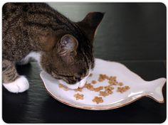 Katzenleckerlies selbstgemacht