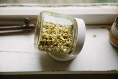 How to: sprout mung beans, lentils, grains + more...