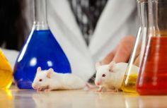Hayvanlar bilimsel denek olarak kullanılabilir mi?
