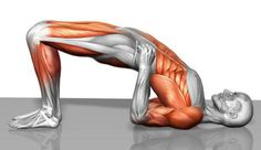 Bridge #Exercise  http://30dayfitnesschallenges.com/how-to-do-a-bridge-exercise/?utm_content=bufferd51e1&utm_medium=social&utm_source=pinterest.com&utm_campaign=buffer Excellent For Strengthening The Bum, Legs & Core #30DFC