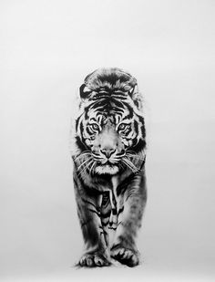 Award winning, luxury wildlife artwork by Carla Grace Art. Australia based artist Carla Grace paints breathtaking realistic wildlife paintings of animals from all over the globe. Tiger Tattoo Small, Tiger Tattoo Sleeve, Tiger Tattoo Design, Lion Tattoo, Sleeve Tattoos, Tattoo Designs, Mens Tiger Tattoo, Tiger Sketch, Tiger Drawing