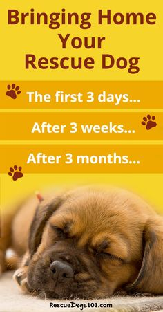 Bringing your new puppy or dog home - 3 things you should do BEFORE picking up your new puppy and the 3 Days, 3 Weeks, 3 Month Rule #adoptdontshop #doggies #doglovers #dog #dogadopt #dogadoption #adoptadog #dogstuff #cuteanimals #puppy #puppylove #rescuedogs101   via @rescuedogs101