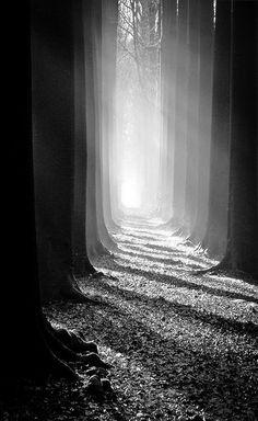 penombra tra gli alberi - fotografia in bianco e nero