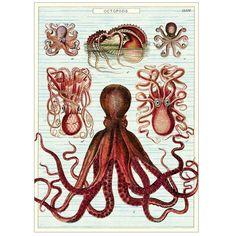 Wrap - Octopods