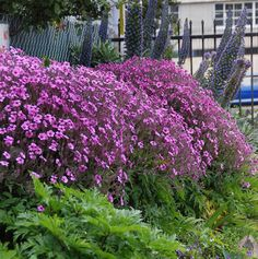 Photo #13303 | Geranium maderense | plant lust