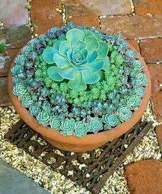 Resultado de imagem para como plantar suculentas