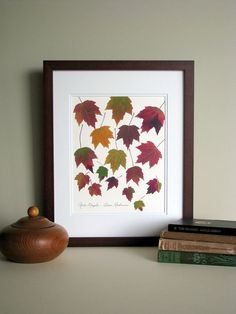 Pressed leaves print, Red Maple leaves falling, 11x14 double matted print, wall art no. 0061