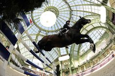 Showjumping in the Grand Palais at Saut Hermes.  thebeautyofsports:    Rolf-Goran Bengtsson, riding Casall La Silla, competes during the International Jumping Competition April 4 at The Grand Palais in Paris. (via Big Shots for April 9, 2010 - Big Shots - Boston.com)