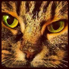 Nutmeg's Beautiful Eyes - Photo from the Instacanvas gallery for lunaraye.