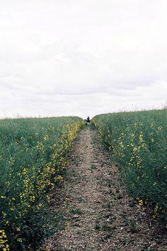 l'antipodeuse: Wiltshire, England