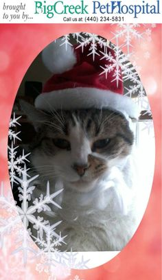 Big Creek Pet Hospital, Veterinary Hospital Middleburg Heights, Ohio, 44138 :: 2014 Holiday Picture Contest