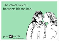 """The camel called..... he wants his toe back."" - someecards"