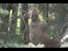 Morbid Stories Of Bigfoot Encounters & Habituation Real Bigfoot Pictures, Bigfoot Photos, Aliens, Bigfoot Costume, Bigfoot Documentary, Bigfoot Stories, Bigfoot Encounters, Pie Grande, Bigfoot Sightings