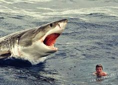 Awkward Shark Mickfanning Amusing Pinterest - Man fights great white shark sydney harbour jumping cliff