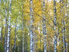 Sibelius - Karelia Suite Quite an history!!! https://en.wikipedia.org/wiki/Karelia_(historical_province_of_Finland)