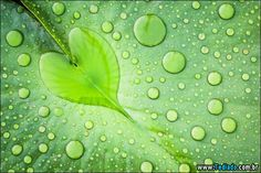 Seleção das melhores imagens que mostra que a natureza nos ama, de um jeito simples e belo