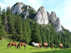 free horses in carpathian mountains romania scenery Ukraine, Places To Travel, Places To Visit, All Small Dog Breeds, Small Dogs, Free Horses, Carpathian Mountains, Horse Ranch, Mountain Landscape