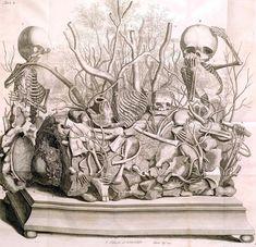 Morbid menagerie: The opulent death displays of Frederik Ruysch Memento Mori, Crane, Model Tattoo, The Artist, Illustration Botanique, Human Body Parts, Peter The Great, Virtual Museum, Vanitas
