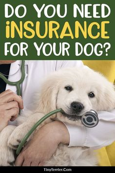 Should you buy pet insurance for your dog? Find out why pet insurance is so important, and an alternative to pet insurance that still keeps your dog protected. Dog Health Tips, Dog Health Care, Cat Health, Health Advice, Dog Care Tips, Pet Care, Dog Insurance, Pet Health Insurance, Cheap Pets