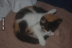 I think the new kitty may be special... Yes, she is sleeping.