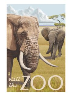 African Elephant - Visit the Zoo Premium Poster