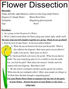 Here is a chart and simple directions for a flower dissection project...