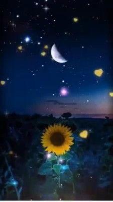 Good Night Prayer, Good Night Blessings, Good Night Gif, Good Night Image, Beautiful Nature Wallpaper, Beautiful Gif, Beautiful Flowers, Beautiful Fantasy Art, Good Night Greetings
