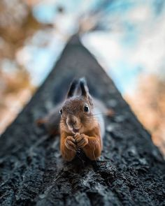 Photographer Shoots Finnish Forest Animals Like They're Professional Models, And The Results Are Dreamlike