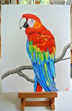 Original piece!Macaw parrot with vibrant feathers.*11in. x 14in.*Prismacolor Premier colored pencils and ink*Strathmore Bristol paper 300 series Bird Drawings, Pencil Art Drawings, Cool Art Drawings, Art Drawings Sketches, Animal Drawings, Drawing Ideas, Horse Drawings, Drawing Art, Parrot Drawing