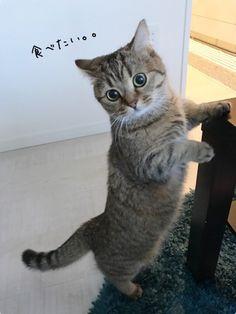 Whatcha doing kitty?