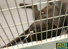 Memphis Kill shelter up for adoption