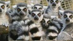 groep dieren - Google zoeken