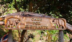 Programa Care For Elephants, do Elephant Nature Park Chiang Mai, Elephant Nature Park, Blog, Window, Elephants, Thailand, Blogging
