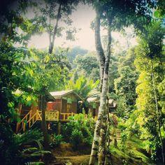 Guesthouse Matleon, Taman Negara, Malaisie http://www.trace-ta-route.com/recits/malaisie-trek-dans-la-jungle-au-coeur-du-parc-national-taman-negara/