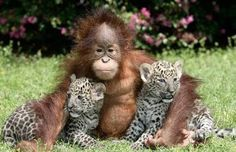Image result for cute animal pictures