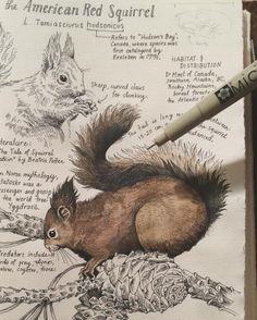 Mammal Observation Sketch 0001