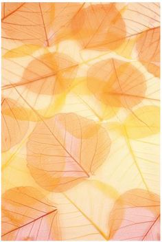 Autumn often brings to mind a time of family and friends and entertaining.  When the air gets crisper, do you envision gathering with loved ones around a Thanksgiving table?  If the thought of out of state guests staying in your house over the holidays leads you to the conclusion that it's time for renovations, then you need to start now!  Renovations, even small ones can take several weeks!