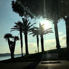"""Profitons de ce beau temps exceptionnel... retour de """"l'automne"""" ce we paraît il! Bon mercredi #printemps #spring #ilfautbeau #nice #cotedazur #cotedazurnow #frenchriviera #palmier #mer #sea #palms #pins #pinus #sun #sunrise http://themouse.org"""
