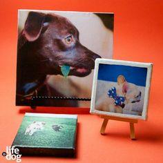 DIY Custom Dog Art Canvases