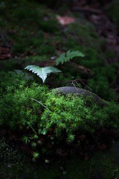 forest of the moss by duke uehara on 500px.com