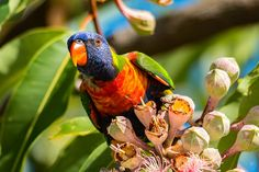 A selection of birds and insects images by Deborah Bisley potographer.  Images are available for sale as prints or canvas wall art.