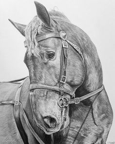"""""""Suffolk Gentleman"""" winner of the drawing prize Bury St Edmunds Art Exhibition ✏ I loved capturing his gentle personality, one of my favourite heavy horse breeds is the Suffolk punch 😍😊 #art #suffolkpunch #suffolkpunchtrust #heavyhorse #horseart #horselover #horseart #horserider #pencil #pencildrawing #animallover #animaldrawing #animalart #artworld #artofinstagram #loveart #supportart #beautifulhorse #horsedrawing #drawing #pencilart #graphite #dailyart #artground #artswaves…"""