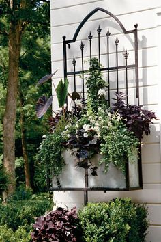 A blank wall becomes a work of art with the addition of a planter. White flowers and black-green foliage are dramatic, echoing the Gothic style of the planter's ironwork.