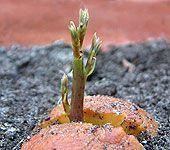 Grow an avocado tree by starting the pit in soil NOT water... here's how. http://www.weekendgardener.net/plant-propagation/plant-avocado-seed-090909.htm?utm_content=bufferbaa74&utm_medium=social&utm_source=pinterest.com&utm_campaign=buffer  http://calgary.isgreen.ca/energy/integrated-bio-refinery/?utm_content=buffer028c4&utm_medium=social&utm_source=pinterest.com&utm_campaign=buffer