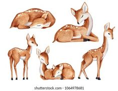 Deer Illustration, Watercolor Illustration, Illustrations, Cute Animal Drawings, Animal Sketches, Baby Deer Tattoo, Decoration Creche, Baby Animals, Cute Animals